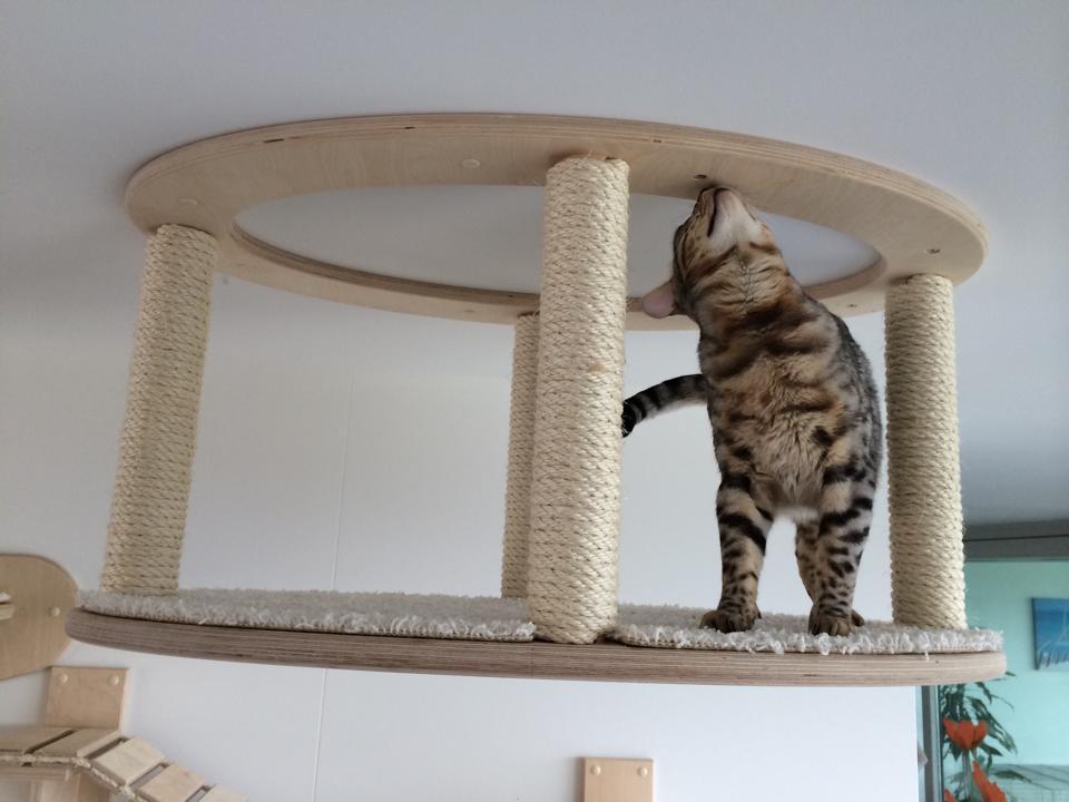 Katzenhimmel Projekt Neff