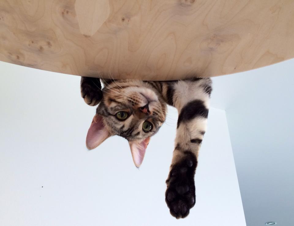 Aussicht vom Goldtatze Katzenhimmel
